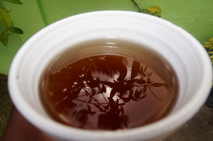 Cup of Bush Tea