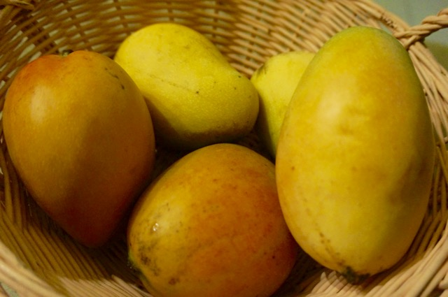 Mangoes on St. Croix